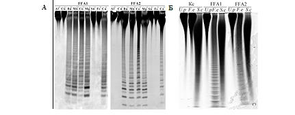 Характеристика каталитических свойств двух новых рекомбинантных фукоиданаз из морской бактерии Formosa algae