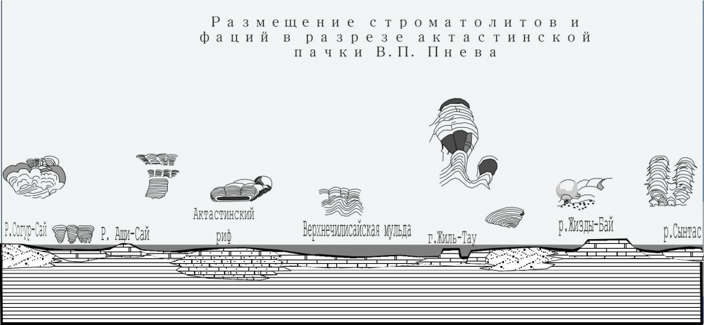 МОРФОГЕНЕЗ ЖИЗНЕННЫХ ФОРМ И ЭКОЛОГО-МОРФОЛОГИЧЕСКАЯ КЛАССИФИКАЦИЯ СТРОМАТОЛИТОВ