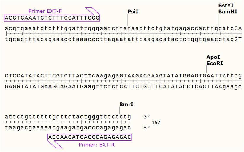 MOLECULAR DESIGN AND CLONING OF SCRAMBLED SMALL-HAIRPIN RNA FOR KNOCKING DOWN HUMAN GELATINASE B (17-23)